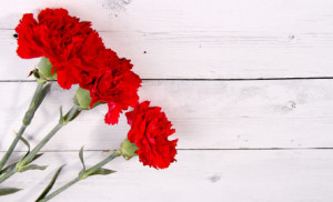 carnation white wood background valentine days